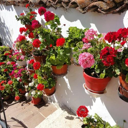 Lugares de España para visitar en Primavera