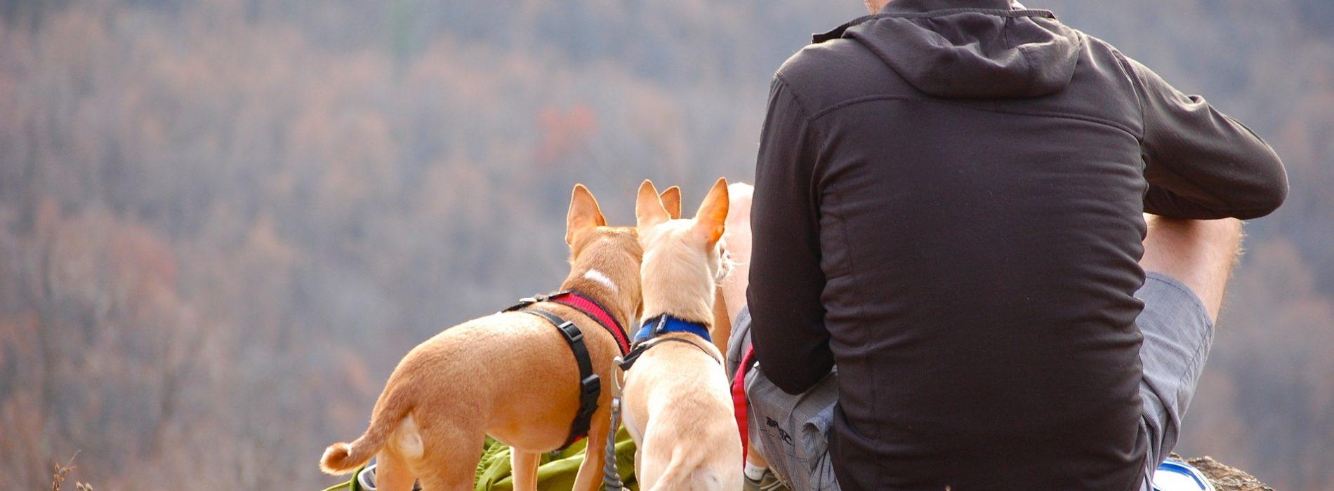 ¿Vas a viajar con tu mascota? Apunta nuestros consejos