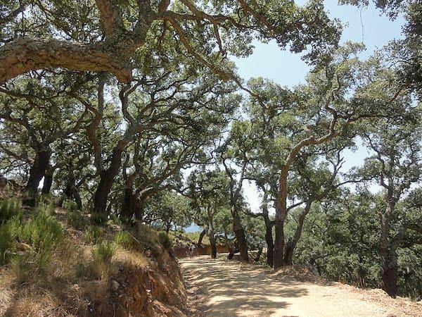 parque natural de Los Alcornocales en la Provincia de Cádiz